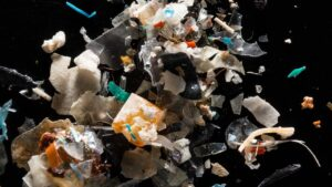Many fish species, including those that are consumed by humans, are eating plastic- Technology News, FP