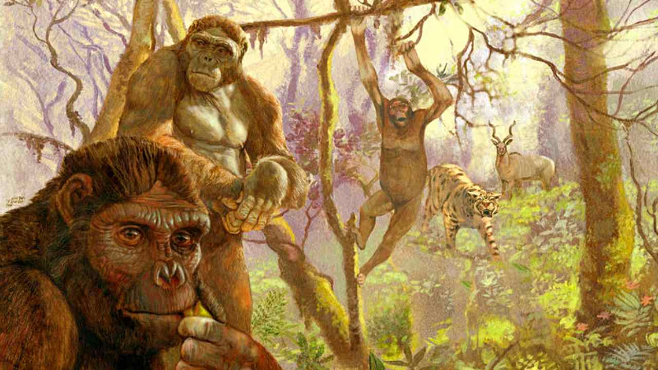 Human ancestor Ardi may have 'swung from trees' like chimps till 4.4 mn years ago- Technology News, FP