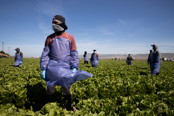 SESO Labor is providing a way for migrant farmworkers to get legally protected work status in the US – TechCrunch