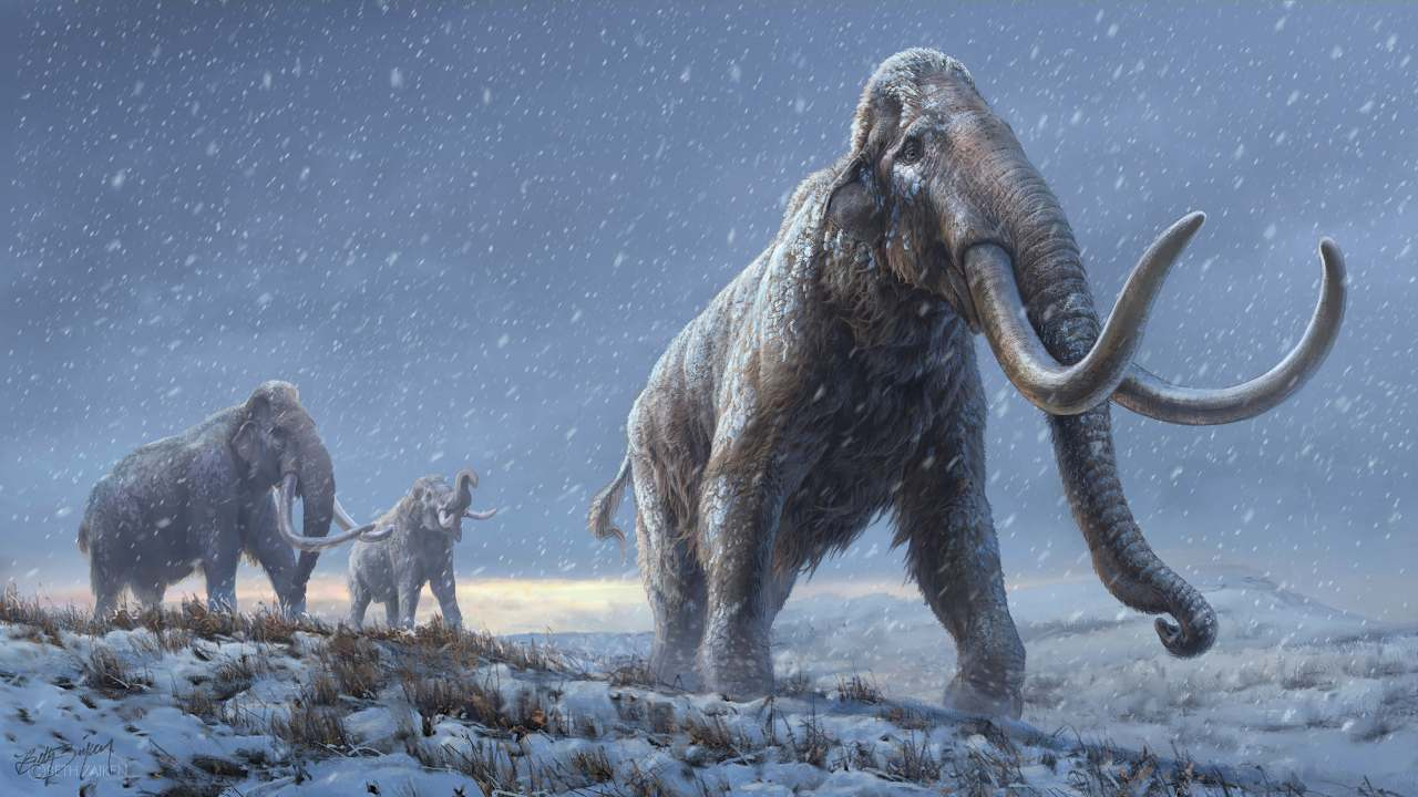 Scientists rewrite mammoth's family tree using DNA from fossil that's more than one mn years old- Technology News, FP