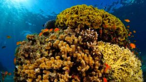 UAE-Israeli oil pipeline is an ecological disaster, threat to Red Sea coral reef- Technology News, FP