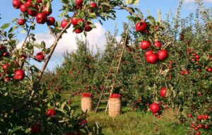 6 Things You'll Need to Start an Organic Farming Business