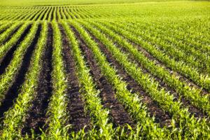 Anuvia raises $103 million to commercialize its novel fertilizer – TechCrunch