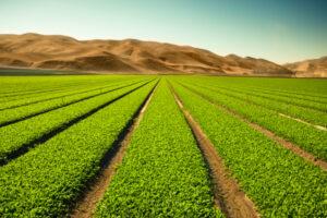 Farmland could be the next big asset class modernized by marketplace startups – TechCrunch