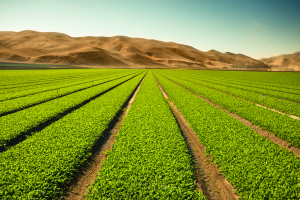 Ag monitoring startup FluroStat merges with soil carbon expert Dagan to form Regrow – TechCrunch