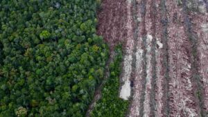 Increasing agricultural demands by rich countries increases deforestation in tropics- Technology News, FP