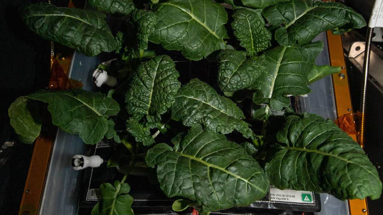 New strains of bacteria found on the space station may help astronauts grow plants on Mars- Technology News, FP