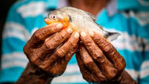 World's freshwater fisheries are under threat of extinction, finds WWF report- Technology News, FP