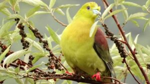 Drastic loss in forest birds have been recorded due to land-use changes in the western Himalayas- Technology News, FP