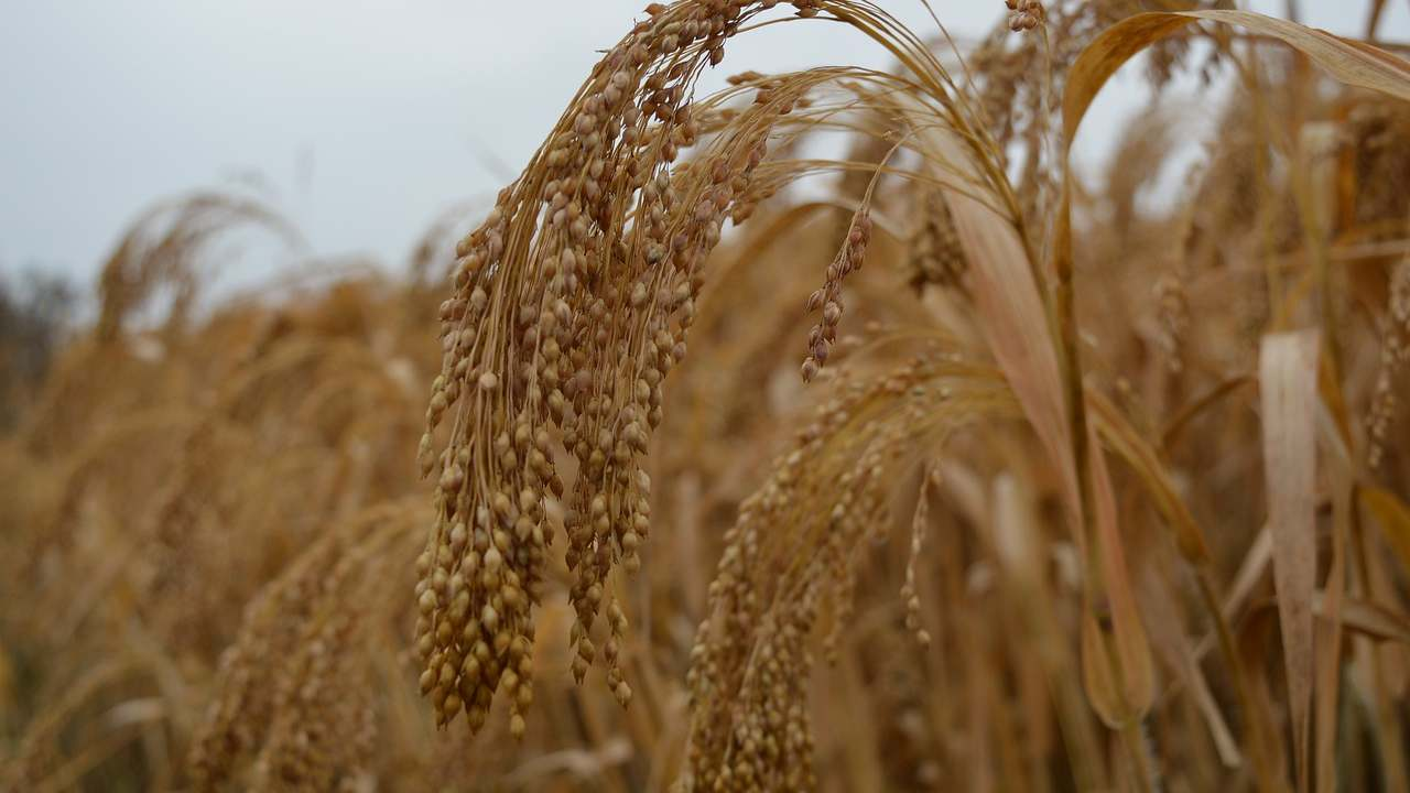 2023 declared 'International Year of Millets' after UNGA unanimously adopts India-led resolution- Technology News, FP