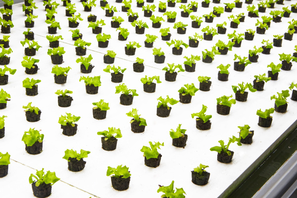 Nordetect's system to monitor soil and water for indoor agriculture raises seed funding – TC