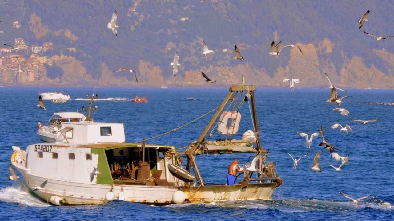 Fishing boats that dredge their nets release carbon equivalent to aviation- Technology News, FP
