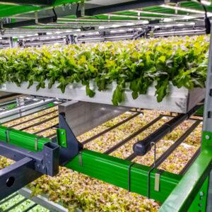 Indoor farming company Bowery raises $300M – TechCrunch