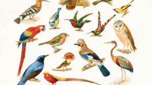 Earth is currently home to anywhere between 50 billion to 428 billion birds, says new study- Technology News, FP
