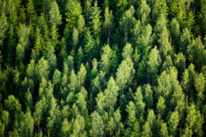 Sylvera grabs seed backing from Index to help close the accountability gap around carbon offsetting – TechCrunch