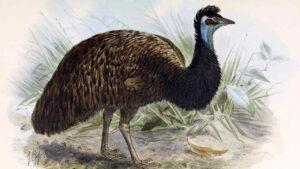 Researchers find eggshells of extinct Dwarf Emu in Australia's sand dunes- Technology News, FP