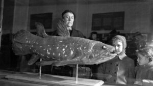Giant, weird-looking coelacanth fish lived for up to 100 years, finds study- Technology News, FP