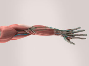 Musculoskeletal medical startups race to enter personalized healthtech market – TechCrunch