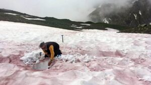 Spring time in the French Alps cause algae blooms that turn the snow red- Technology News, FP