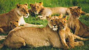How does COVID-19 affect wild animals and pets?-Health News , FP