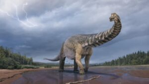 Australia's largest dinosaur was as big as two buses combined- Technology News, FP