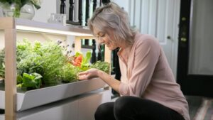 Rise Gardens grows with $9M Series A to help anyone be an indoor farmer – TechCrunch