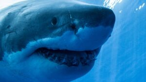 Shark teeth lost in Antarctica millions of years ago recorded Earth's climatehistory- Technology News, FP