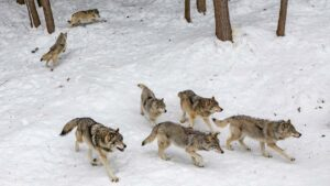 Eight incidents from 2021 that show human-animal conflicts are increasing- Technology News, FP