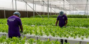 [Funding Alert] Hyderabad-based UrbanKisaan raises undisclosed capital from BVC to expand market presence