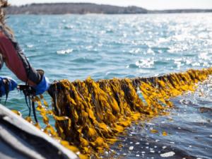 Sea6 Energy Raises $9 Mn Led By Aquaculture Fund Aqua-Spark