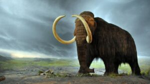 Tracing footsteps of wooly mammoth, scientists learn it was a long-distance wanderer- Technology News, FP