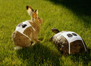 'The tortoise and the hare' story is playing out right now in VC – TechCrunch