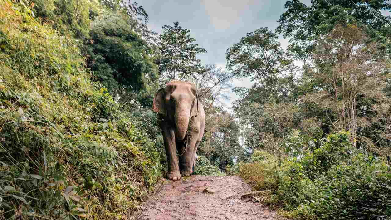 India to conduct first scientific estimation of its elephant population in 2022- Technology News, FP