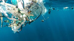 Migratory animals are 'most vulnerable' to plastic pollution, microplastics finds UN Asia-Pacific regional report- Technology News, FP
