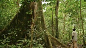 What is the cost of the trees in the Gabon forests that suck in carbon dioxide- Technology News, FP