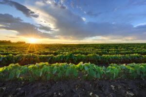 Fintech is transforming the world's oldest asset class: Farmland – TechCrunch