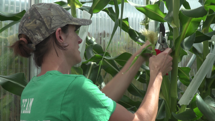 AgBiome lands $166M for safer crop protection technology – TechCrunch
